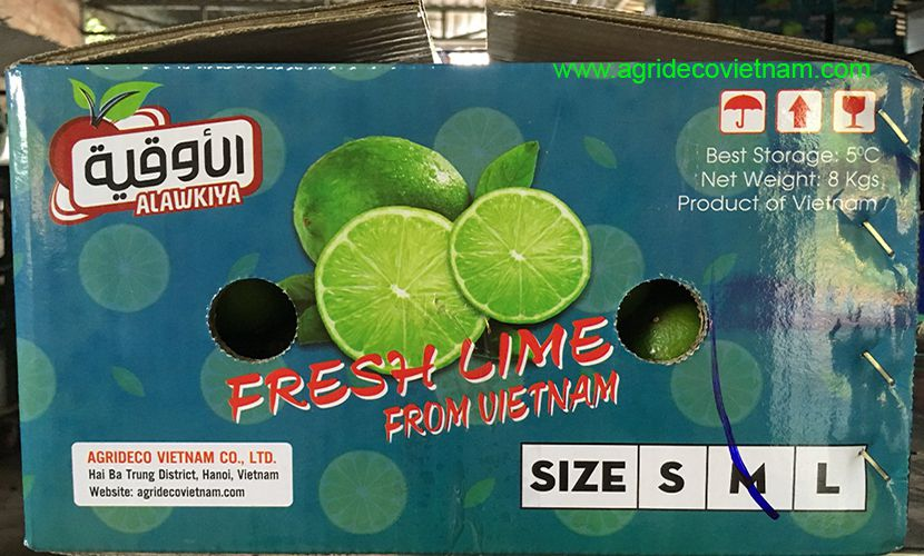 Packaging fresh lime from Vietnam