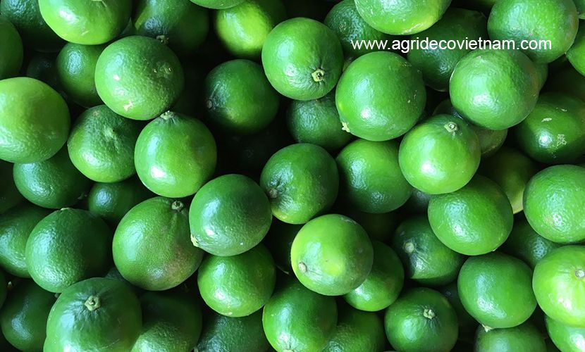 Vietnamese fresh lime
