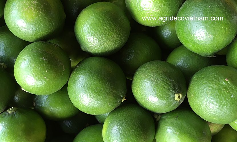 Vietnamese seedless lime