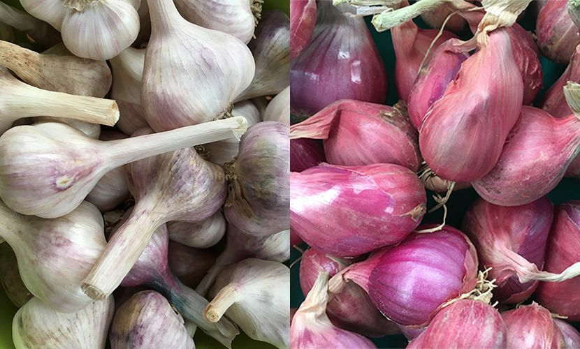 Vietnamese garlic and shallot to export