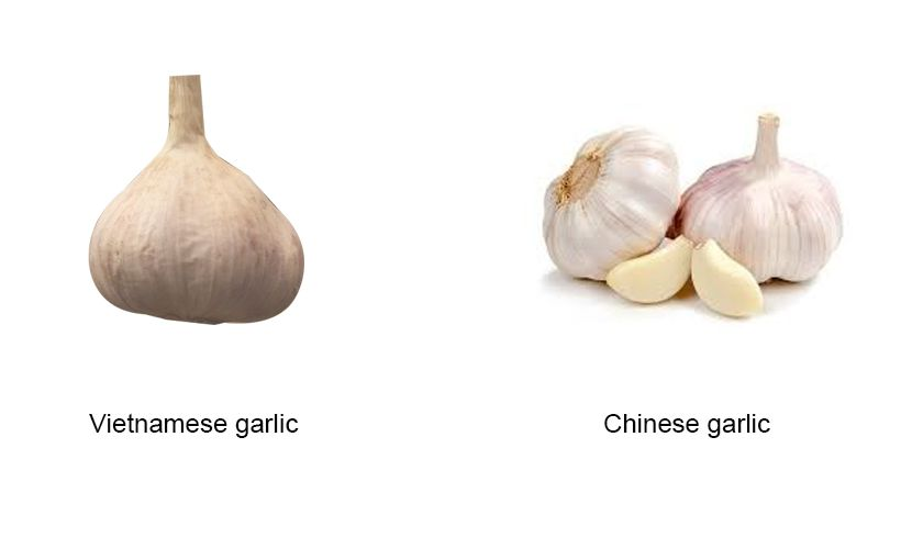 Differentiate Vietnamese garlic and Chinese garlic