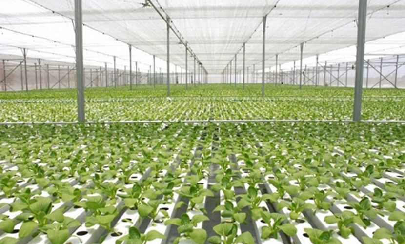 Vietnam's agriculture