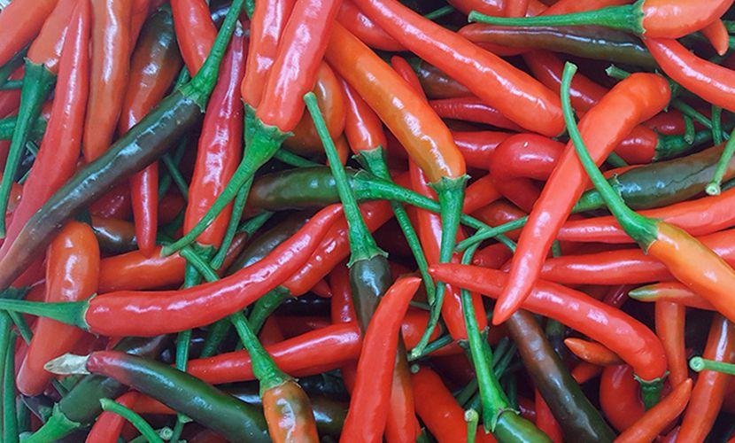 price of fresh chilli in Vietnam