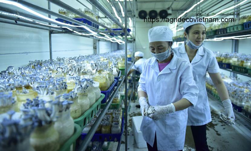 High-tech agriculture in Hanoi