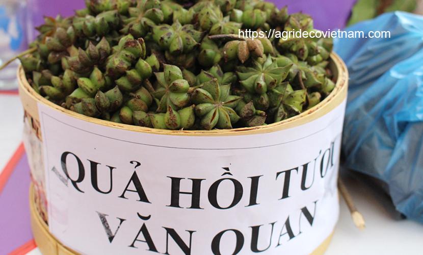 fresh star anise in Vietnam