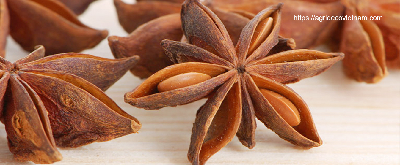 STAR ANISE FROM VIETNAM