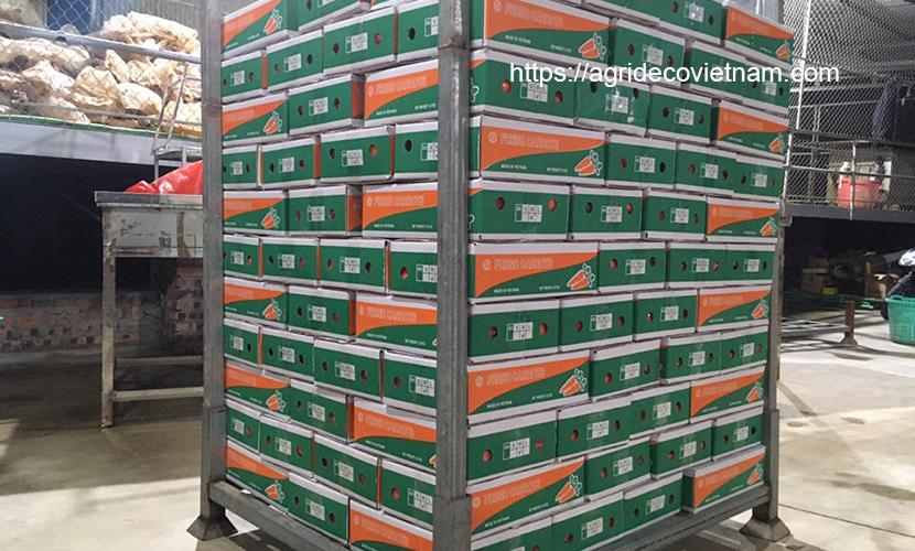 Vietnamese carrots: Packing 4.5kg net box