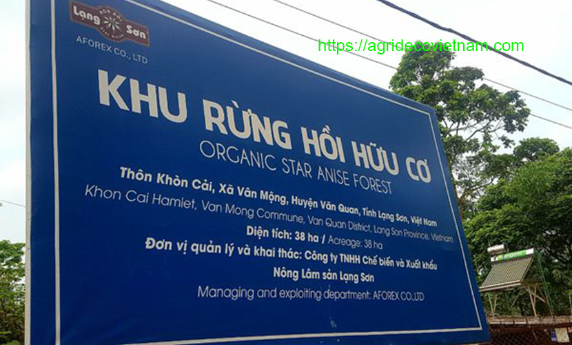 An organic star aniseed project in Van Quan district