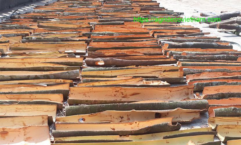 Saigon cinnamon: fresh barks