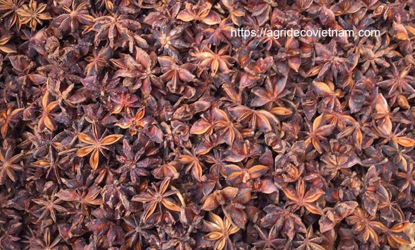 Dried star anise from Vietnam