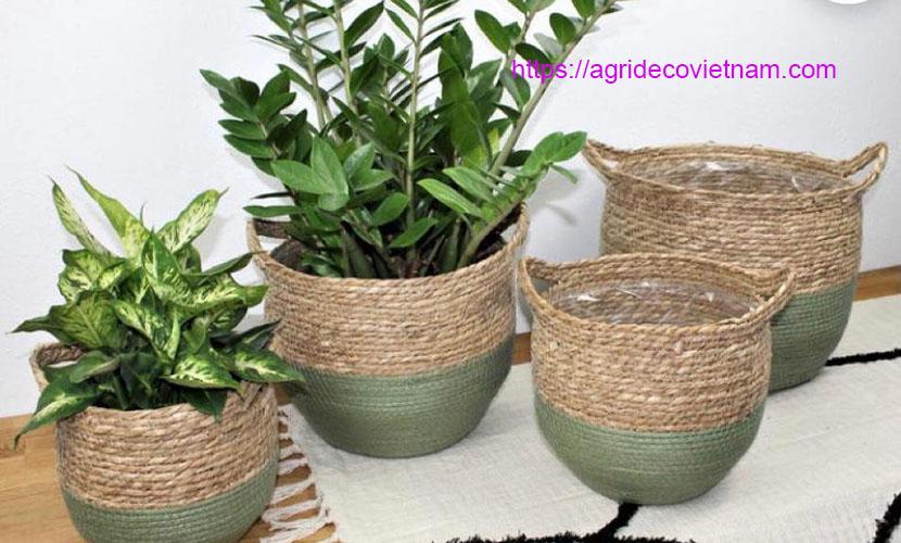 Sedge baskets for planting trees