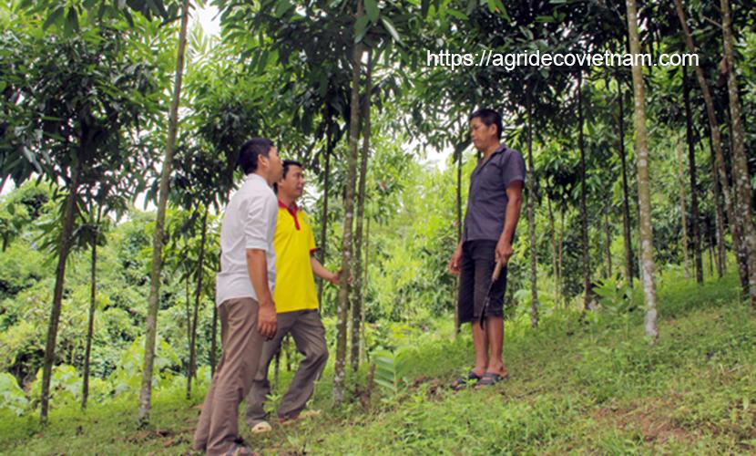 Vietnam cinnamon forest